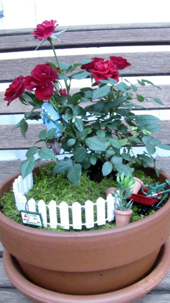 Miniature Mother's Day Rose Garden