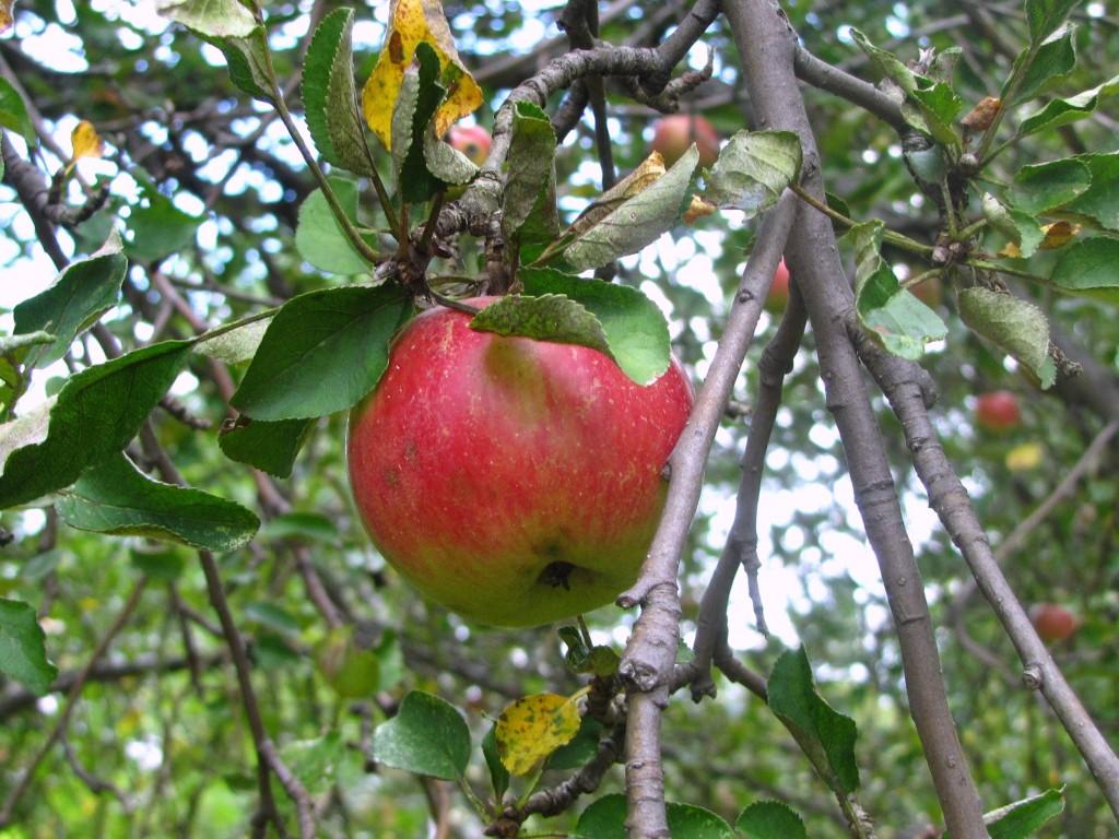 Recipes: A Healthier Apple Crisp