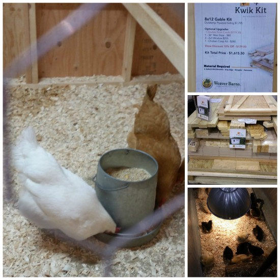Raising Chickens and Chicken Coop Kits