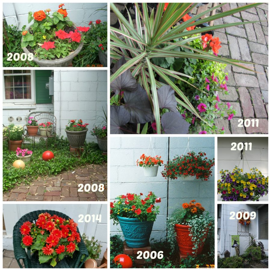 8 Tips for Creating Long Lasting Container Plants
