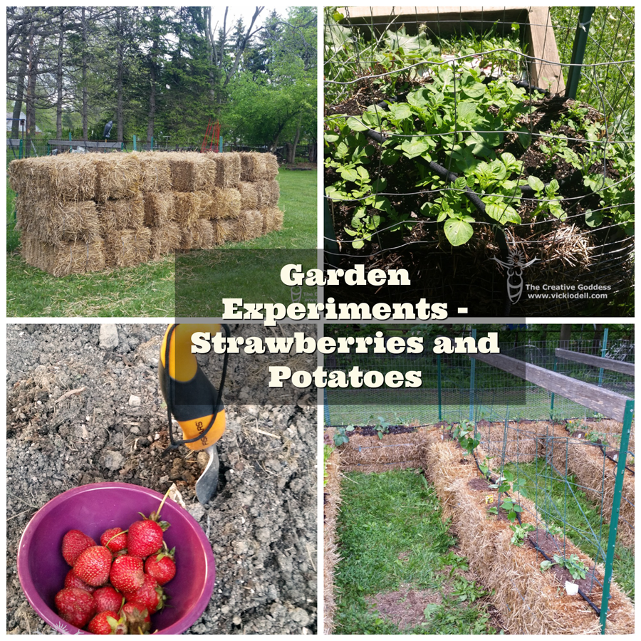 Garden Experiments - Strawberries and Potatoes