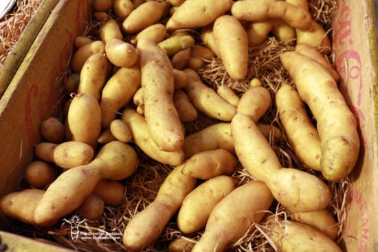 potato storage - fingerling potatoes - old soda crate