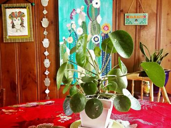 Healthy Houseplants, Chinese Money Plant, Bohemian, Dining Room