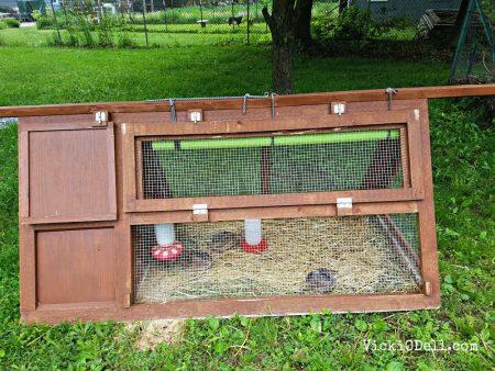 quail, garden, eggs, homestead