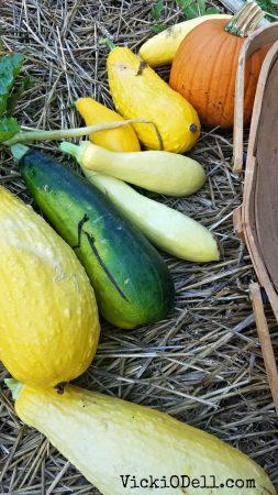 garden harvest 2018 = Yellow Squash, zucchini, pumpkin