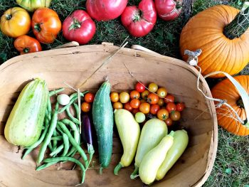 garden harvest 2018 - sweet peppers, cucumbers, cherry tomatoes, pumpkins, green beans, quail egg, eggplant