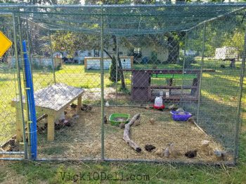 Quail Enclosure - Farming & Quail- No Place for Sissies