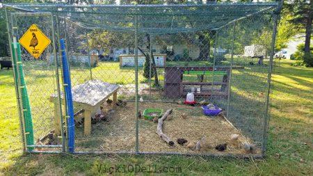 Quail Enclosure - Farming & Quail- No Place for Sissies