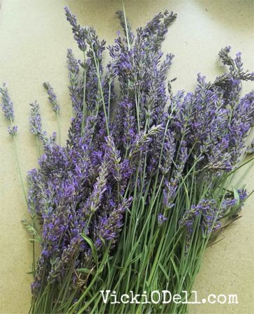 Lavender grown on Thank Goddess Farm